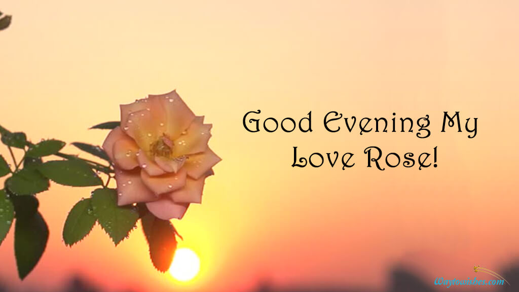 Good Evening My Love Rose