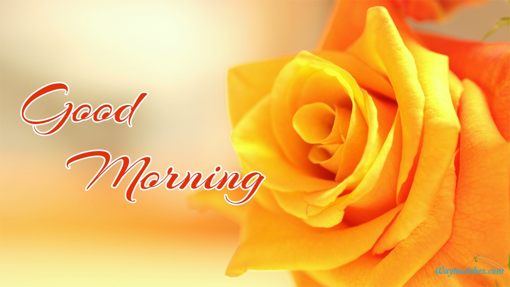 Good Morning Yellow Rose