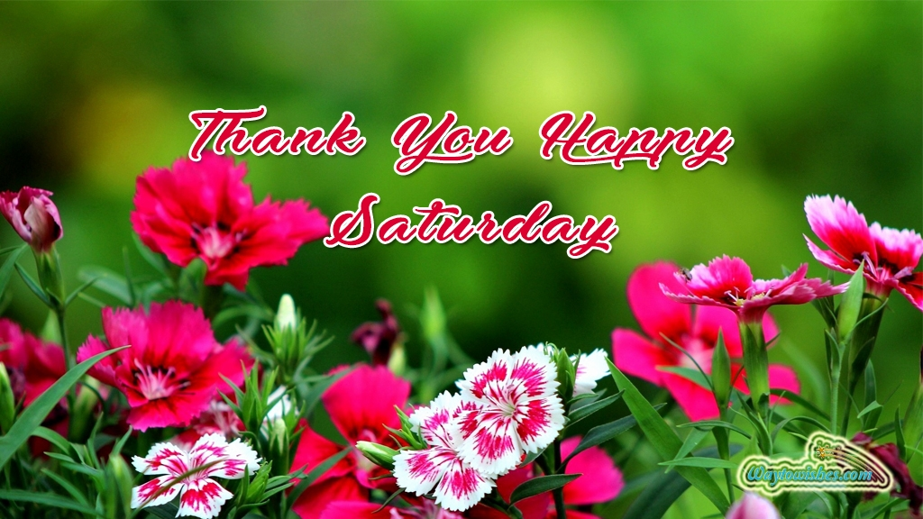 Thank You Happy Saturday