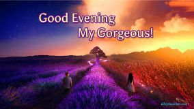 Good Evening My Gorgeous