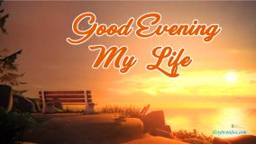 Good Evening My Life