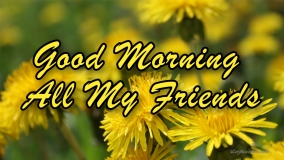 Good Morning All My Friends