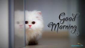 Good Morning Cute