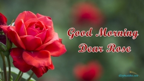 Good Morning Dear Rose