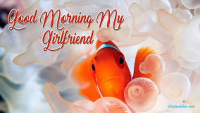 Good Morning My Girlfriend