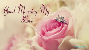 Good Morning My Love Rose