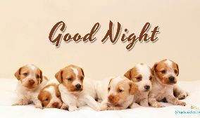 Good Night Dog Images