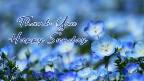 Thank You Happy Sunday