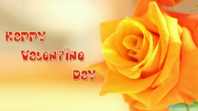 happy valentine day yellow rose